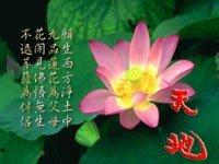 Cảm nhận bài thơ Cảnh ngày hè - Nguyễn Trãi