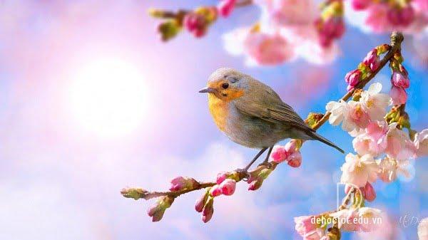 Cảm nhận về bài thơ Mùa xuân nho nhỏ - Thanh Hải