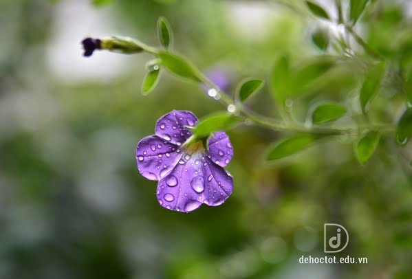 Phân tích bài thơ Mua xuân nho nhỏ hay nhất - Thanh Hải
